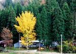 炭焼きの秋