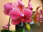 造花と胡蝶蘭の色