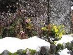 薪 花 雪