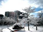 雪の先端大