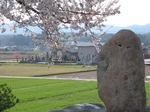 山田の桜3