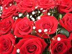 赤のバラの世界