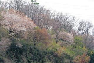 山の春.JPG