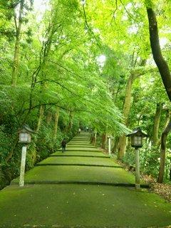 新緑の白山さん参道