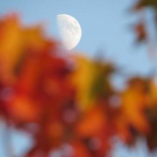 秋空と紅葉と月.JPG