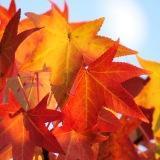秋空と紅葉と月1.JPG