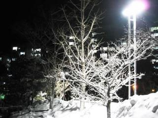 雪の夜.JPG.JPG