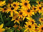光触媒黄色の花