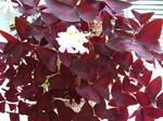 光触媒の花8