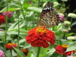 光触媒と蝶 1
