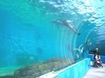 能登島水族館7