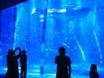 能登島水族館ジンベザメ